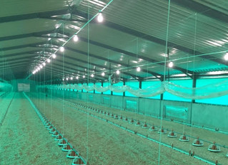 Bioenergy Heating For Drier Poultry Sheds