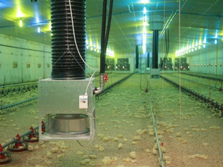 Poultry shed heating-an efficient solution