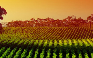 There's More to a Grape Than a Glass of Wine...Biomass in the Wine Industry
