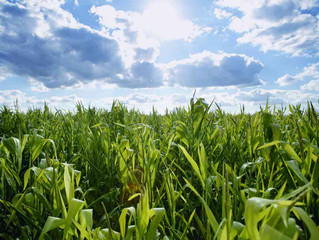 The Potential For Biomass in Farming
