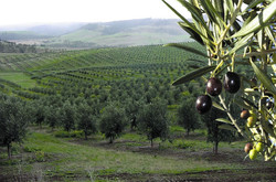 Fruit farming - biomass energy