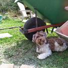 Julie the pup