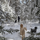 winterlife in our backwoods