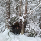 Winter Fort building in the woods