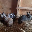 Bunnies in the barn