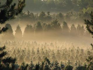 Spotlight on...Christmas Trees!