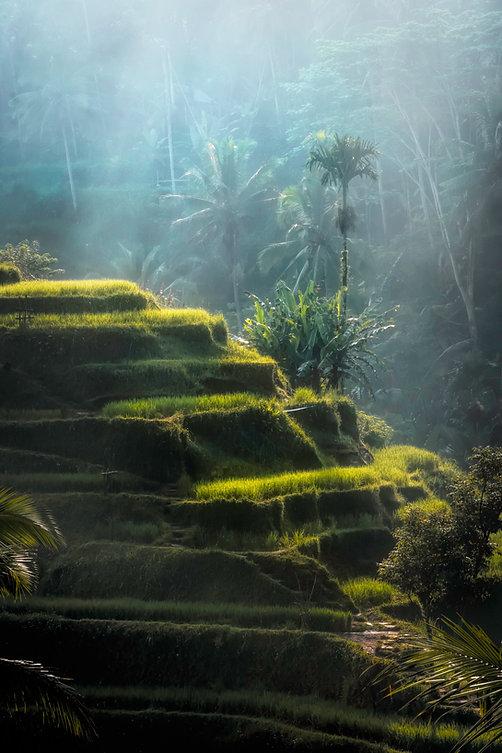 bali-environment-fog-2100804.jpg