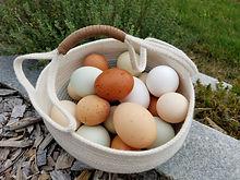 eggs 2020.jpg