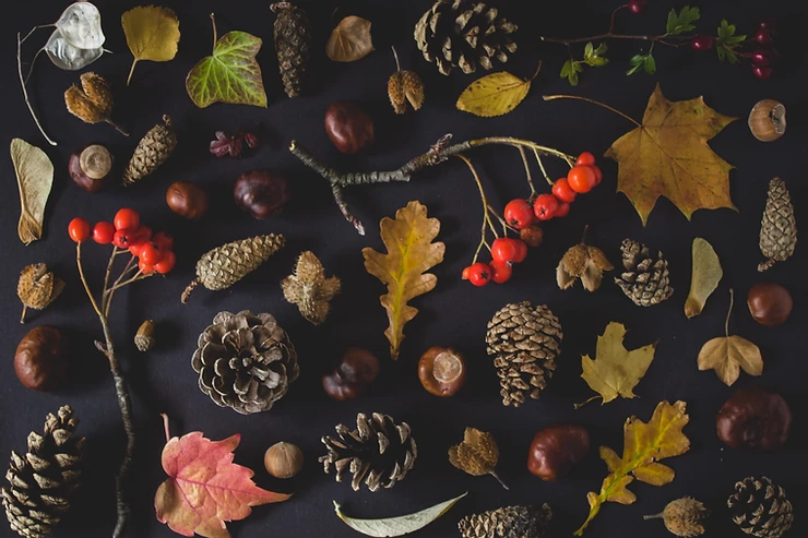 Connecting with the Liminal of Autumn Equinox