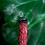 Thumbnail: Dragon's Blood Herb Bundle