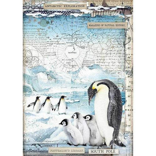 Penguins, Arctic Antarctic