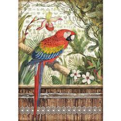 Parrot, Amazonia~Rice paper