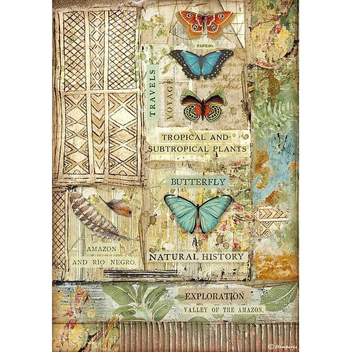 Butterfly, Amazonia