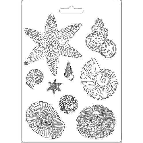 Shells, Arctic Antarctic
