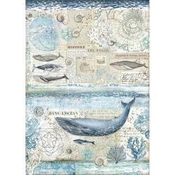 Stamperia Rice Paper Sheet A3 History Of Whale, Arctic Antarctic