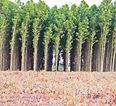 tree farms.jpg