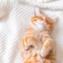 cat-sleeping-e1562875994725.jpg