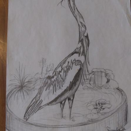 Blue Heron in pool