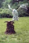 EAGLE ATTACKING THE DRAGON