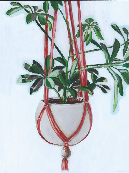 Hanging House Plant in Red Rope - 8x10