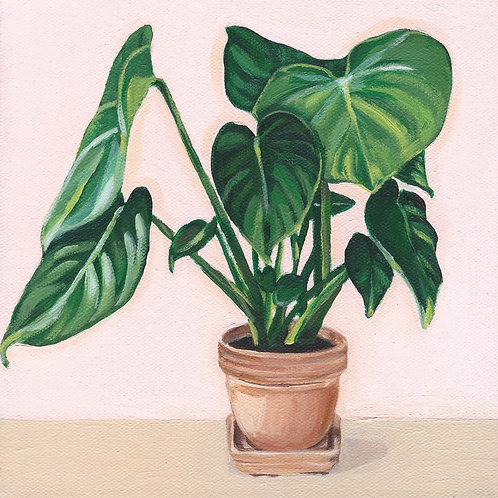House Plant in Terracotta - 8x8