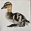 Thumbnail: Duckling 6x6