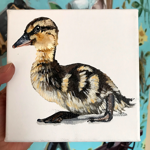 Duckling 6x6