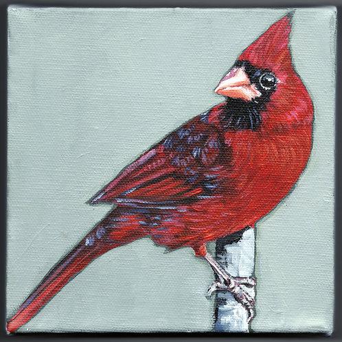 Cardinal 6x6