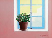 1984.  Vaso e planta