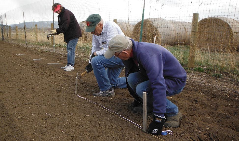 Measuring rows