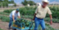 Zucchini harvest!