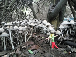 גמד עץ וחוטים מלופפים