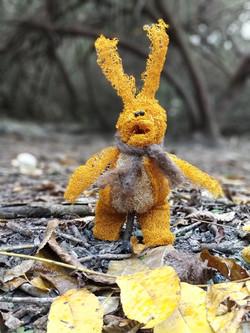 ארנבון ליפה