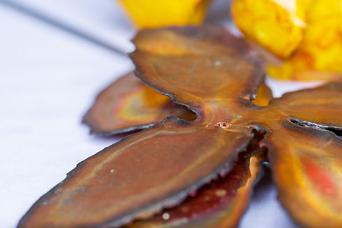 Recycled Copper Rose Petals in Process with Yellow Rose in Background