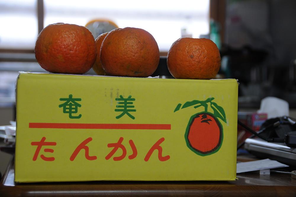 奄美大島産のたんかん