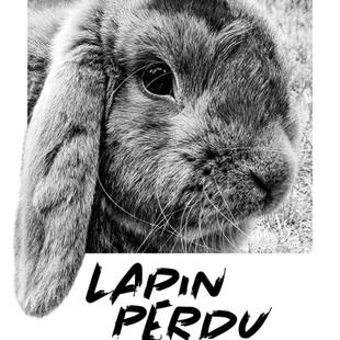 LAPIN PERDU