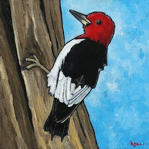 """""""Red-headed Woodpecker 2"""""""