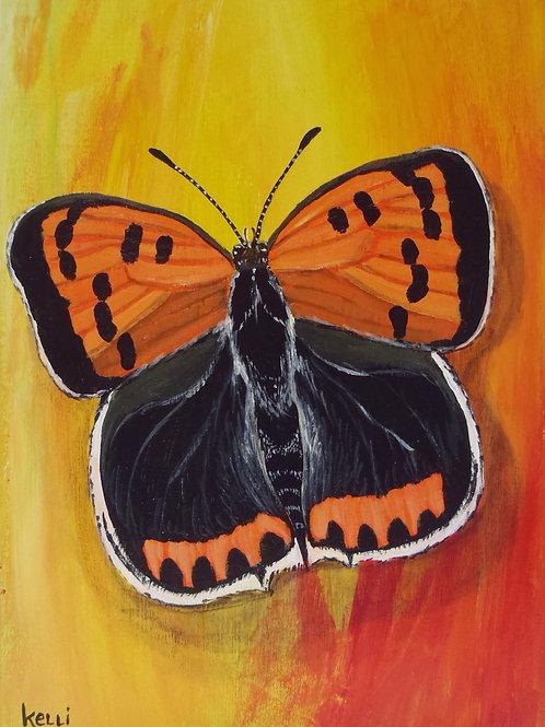 """""""American Copper Butterfly"""""""
