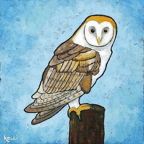"""Barn Owl 2"""