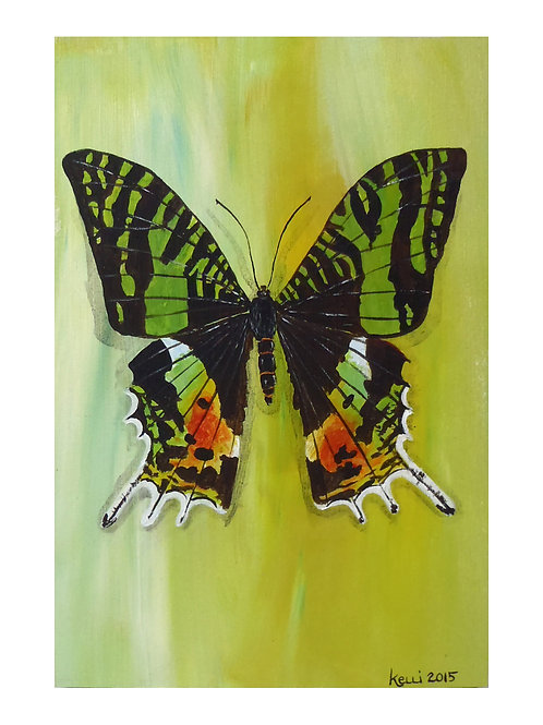 Art Card: Madagascar Sunset Moth