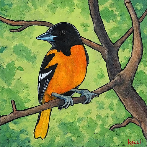 """Baltimore Oriole 4"""