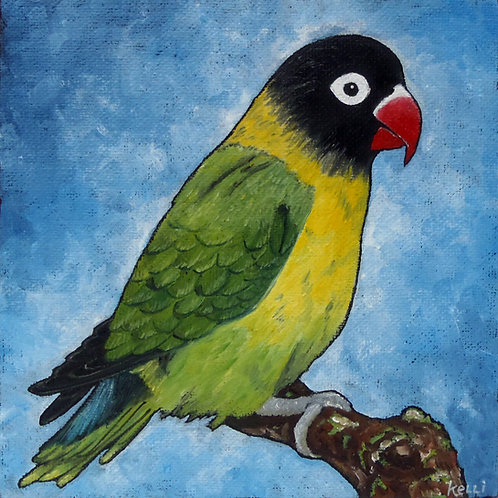 """Yellow-collared Lovebird"""