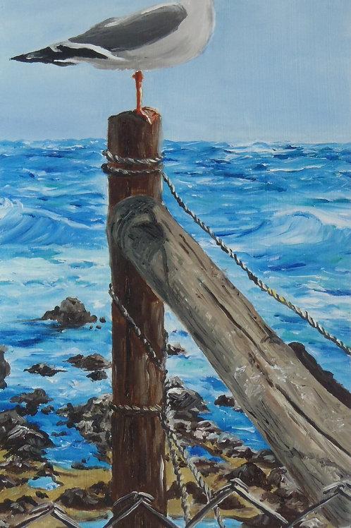 """Seagull at Monterey Bay, CA"""