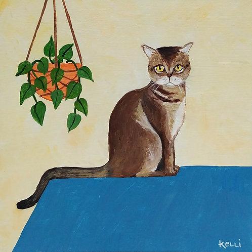 """""""Here Kitty Kitty 1"""""""