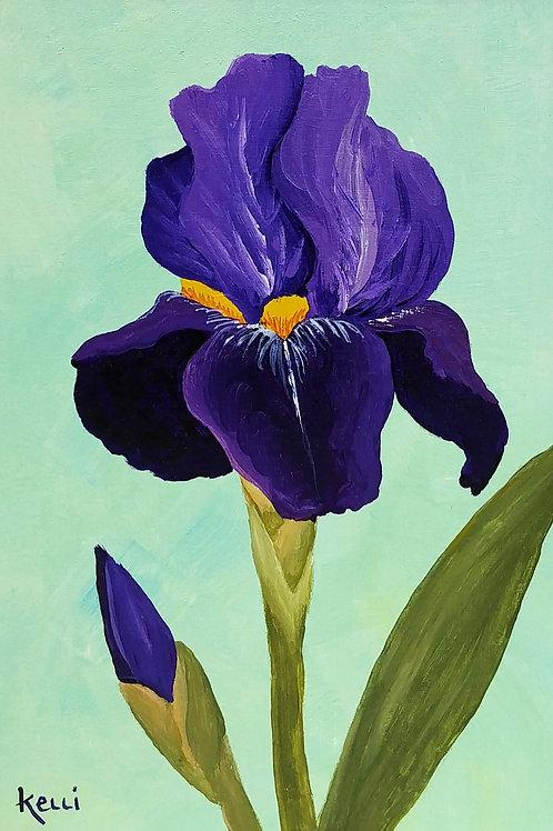 """""""Iris 1"""""""