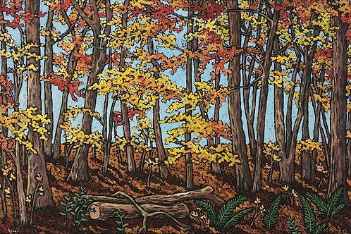 """Autumn Trees at Devils Lake State Park"""