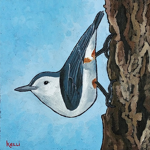 """White-breasted Nuthatch"""