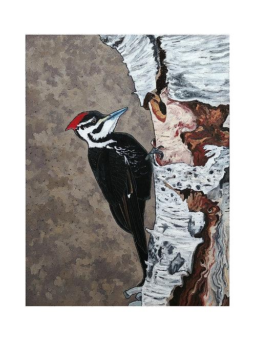 Art Card: Pileated Woodpecker on Birch