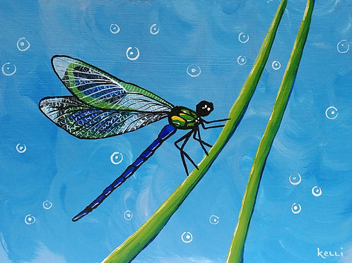 """Dragonfly 5"""