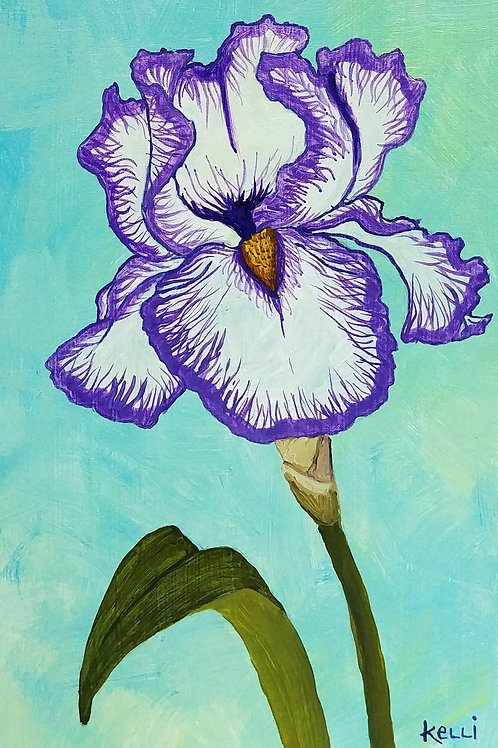"""""""Iris 6"""""""
